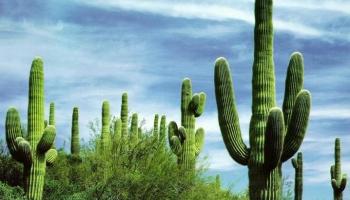 Чем можно заняться в Мексике