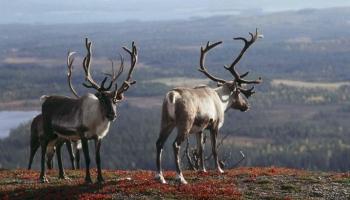 10 причин посетить Финляндию