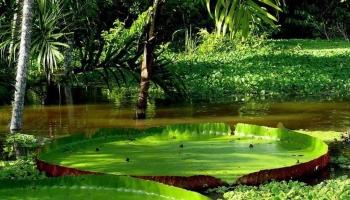 Путешествие по Амазонии