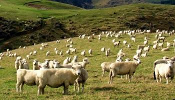 Отрасли сельского хозяйства Бразилии