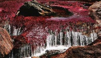 Река Каньо Кристалес фото